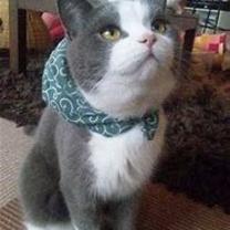 猫のおしゃべり/一度モラハラを受け入れてしまったらの記事に添付されている画像