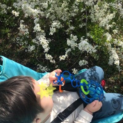 コボちゃんと春*の記事に添付されている画像