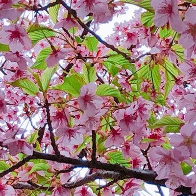 3/21「光を観る旅 東寺」開催しましたの記事に添付されている画像