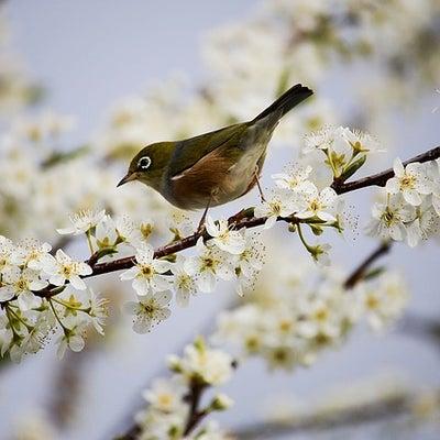 この春、新しい環境で生活するあなたへの記事に添付されている画像