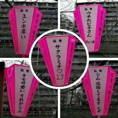 【情報画像】今年も目黒川桜まつりにユノとチャンミンのちょうちんの記事に添付されている画像