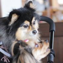 犬連れ旅行 長野① ~素敵な偶然その1とROCKでお得にランチ編~の記事に添付されている画像