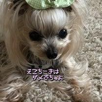 愛おしいシニアちゃん( *´艸`)の記事に添付されている画像