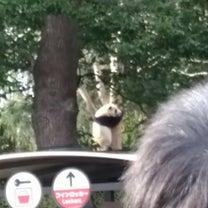 リーリーが木に登ってる!の記事に添付されている画像