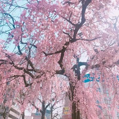 お花見気分の記事に添付されている画像