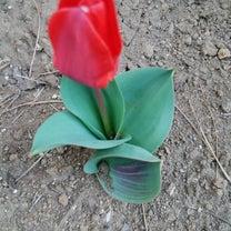 春の花の記事に添付されている画像