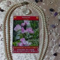 新作 #フラワーラブソングオラクルカード 週末からの恋花はスイートピーの記事に添付されている画像