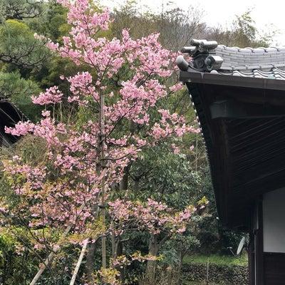 4月7日は花まつりを開催❗️の記事に添付されている画像