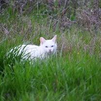 かわいい猫の記事に添付されている画像