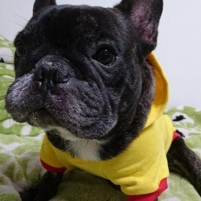 愛犬~Rossi☆(フレンチブルドッグ)の記事に添付されている画像