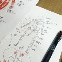 解剖学の記事に添付されている画像