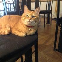 猫のお手とお座り(=^x^=)本日は夜も営業しますの記事に添付されている画像