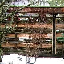 竹と柳の塀の記事に添付されている画像
