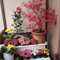『  春の花と  紅葉  』の記事に添付されている画像