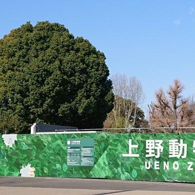 三日目は上野動物園☆理くん情報の記事に添付されている画像