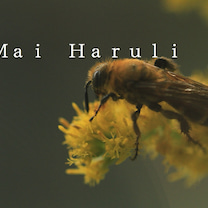 舞はるりラジオ 農薬とミツバチの記事に添付されている画像
