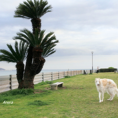 散歩途中でシラスをの記事に添付されている画像