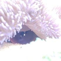 稚魚孵化後10日目の記事に添付されている画像