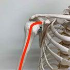 【整形外科テスト】上腕二頭筋長頭腱炎の記事より