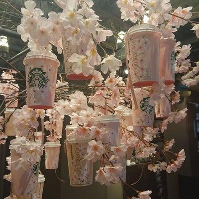 桜満開のスタバ❤️❤️❤️の記事に添付されている画像