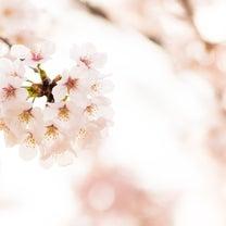 ☆それぞれのお花見☆の記事に添付されている画像