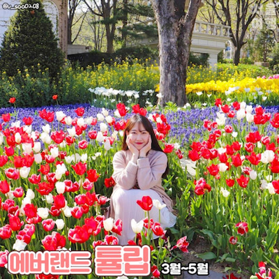 韓国!春のお花名所ご紹介*:+の記事に添付されている画像