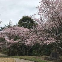 桜が結ぶご縁の記事に添付されている画像