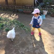 烏骨鶏との記事に添付されている画像