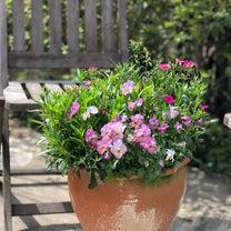 花好きの友人への記事に添付されている画像