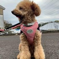 雨にも負けず、犬は散歩に出かけます!の記事に添付されている画像