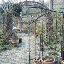 販売用薔薇苗置き場の様子の記事に添付されている画像