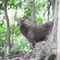 屋久島の動物たちの記事に添付されている画像