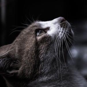 猫のヒーリングのご感想の画像