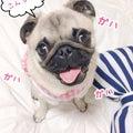 #アイドル犬の画像