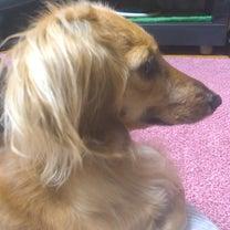 愛犬の変化の記事に添付されている画像