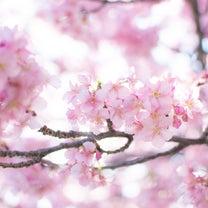 春を楽しみながら、花冷えと上手におつきあいできていますか?の記事に添付されている画像
