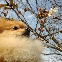 春は突然やってくるねぇの記事に添付されている画像