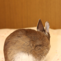 妹が広島への記事に添付されている画像