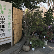 2019.3.24 一日一季語 苗木市(なえぎいち《なへぎいち》)【春―生活―仲の記事に添付されている画像