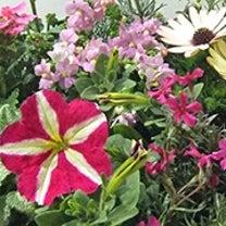 季節のお花 saxia「サクシア」プランツパズル植物長持ち体験!の記事に添付されている画像