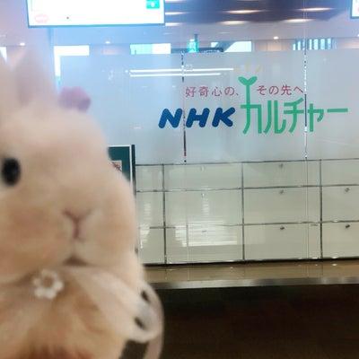お昼寝うさぎさんたち勢揃い!NHK文化センター梅田教室の記事に添付されている画像