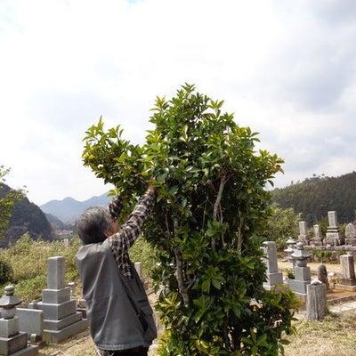 ✤春のお彼岸のお墓参り✤の記事に添付されている画像
