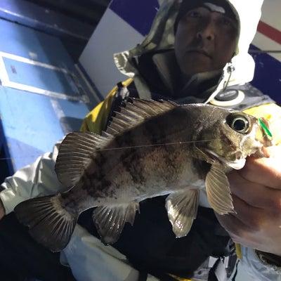 23日 半夜メバル便 釣果の記事に添付されている画像