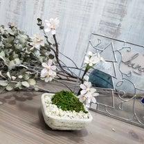 桜ミニ盆栽とロゴの記事に添付されている画像