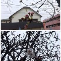 少しづつ 咲き始めましたねの記事に添付されている画像