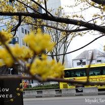 Lines。続・花街歩きツアー伊達武将隊と猫の記事に添付されている画像