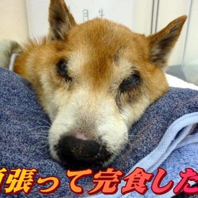 ☆3/24 何とか完食です!老犬本舗☆の記事に添付されている画像