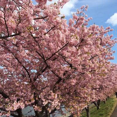【直政】春が来た!!の記事に添付されている画像