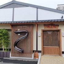 沼津市「うなぎ処京丸」うなぎの稚魚がお出迎え!の記事に添付されている画像