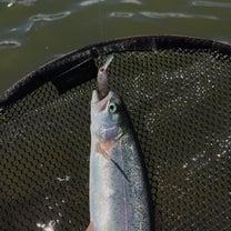 東山湖フィッシングエリアの記事に添付されている画像